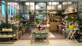 Mobiliers Fleurs et plantes du Super U de Cavignac